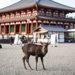 انگشترهای گرسنه - سقوط در جهانگردی ، گوزن ژاپنی را برای معالجه طاغوت ترک می کند |  آسیا